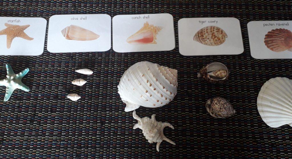Shell matching activity